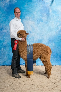 LYA Argos Reserve Champion Brown  klein