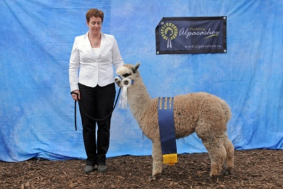 Reserve champion Legendary Grey Fantasy 6-12 months klein